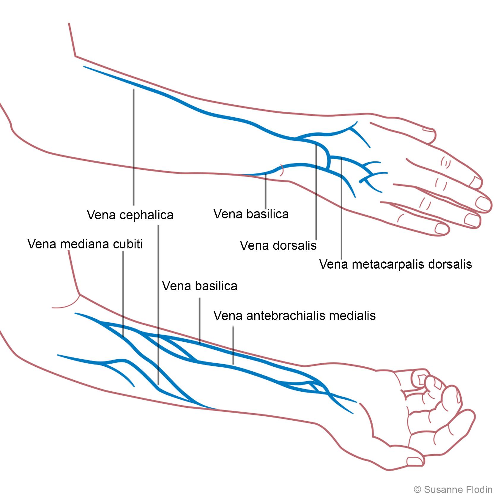 vener i armen